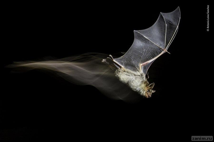 <p>Фото: © Wildlife Photographer of the Year/Natural History Museum/Antonio Leiva Sanchez</p>