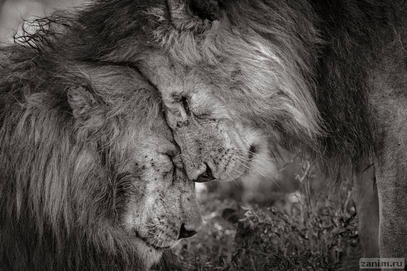 <p>Фото: © Image: Wildlife Photographer of the Year/Natural History Museum/David Lloyd</p>