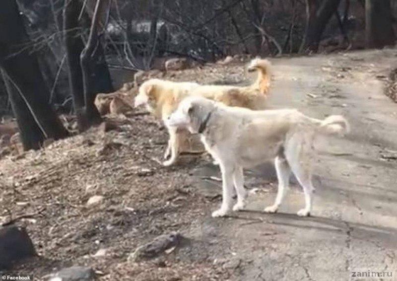 брошенный из-за пожаров пес