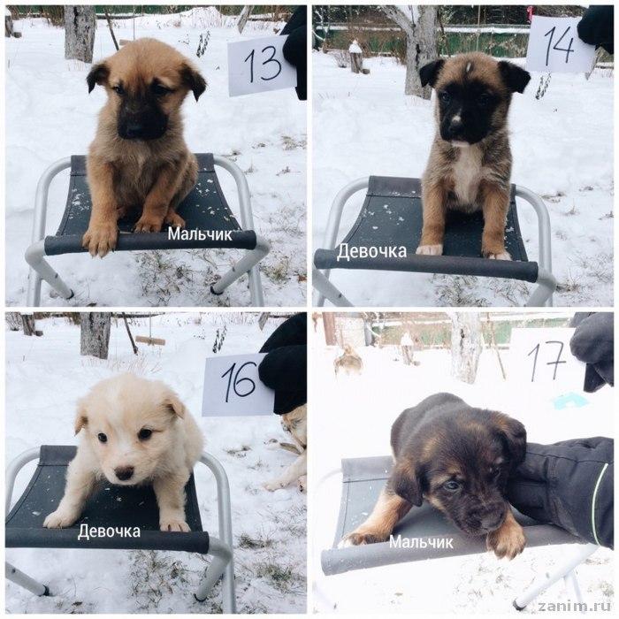 брошенные на морозе щенки