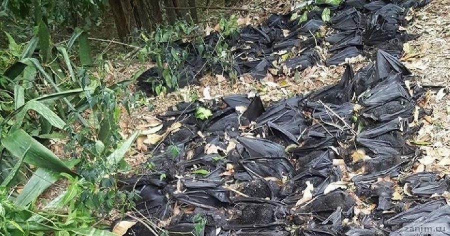 Девушка нашла во дворе 5 000 мёртвых летучих лисиц