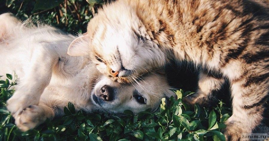 Порода не имеет значения. Названы самые популярные у россиян домашние животные