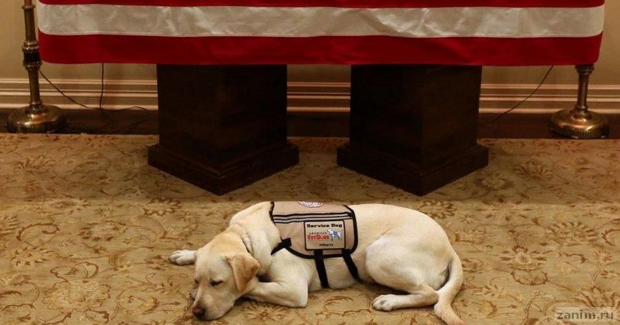 Фото пса Джорджа Буша, который не отходит от его гроба