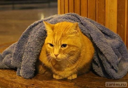 Турецкий дантист помогает уличным животным, накрывая их одеялом от холода