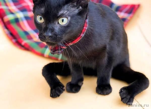 Особенный кот Арис с паучьими лапками