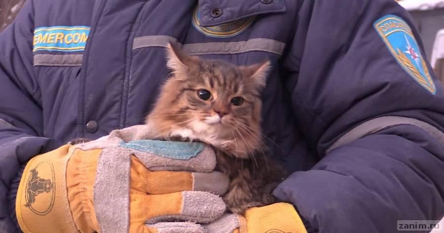 Упавшую в вентиляционную шахту кошку спасли с помощью ведра и корма
