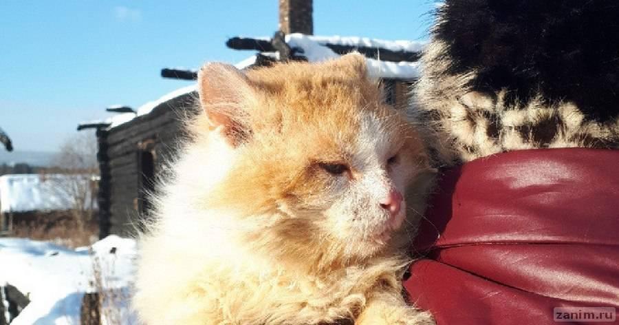Живёт на пепелище дома. Уральский кот Рыжик второй год ждёт погибших хозяев