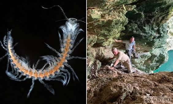 В пещере нашли неизвестное науке ракообразное, похожее на многоножку