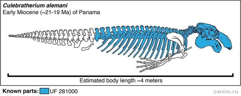 Реконструкция скелета
