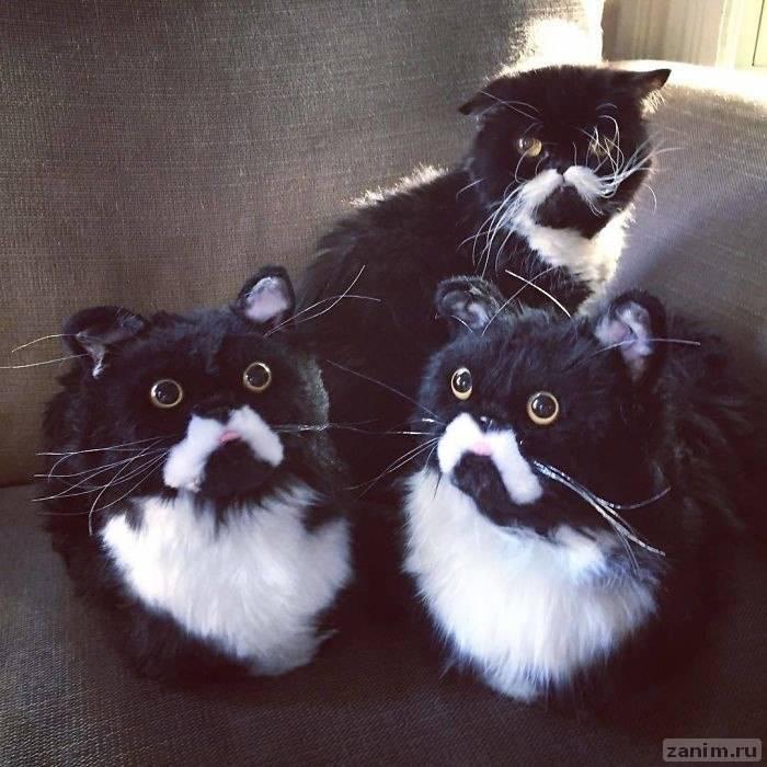 <p>Фото © Cuddle Clones</p>