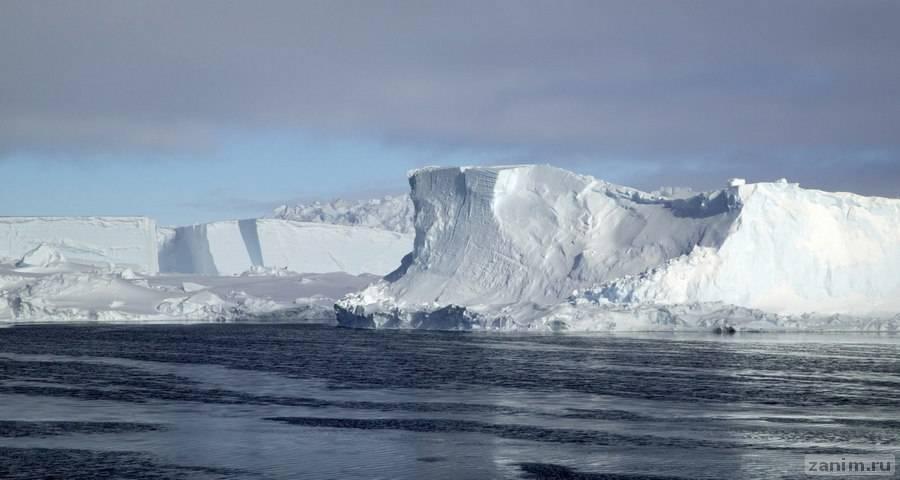 Айсберг размером с два Нью-Йорка вот-вот отколется от ледника в Антарктиде