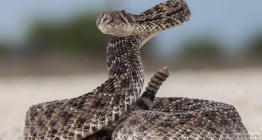 Птица против змеи: смертельная схватка