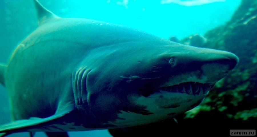 Выявлены самые акулоопасные места планеты