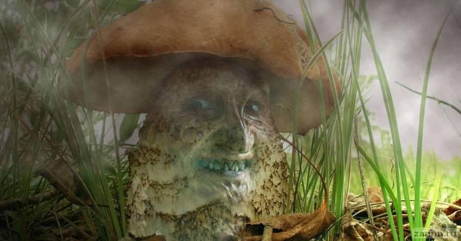 Как охотится хищный гриб