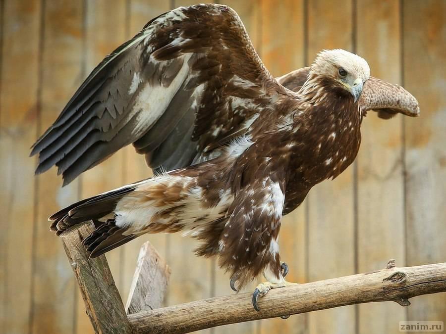 Датчик GPS разоблачил чудаковатого орла