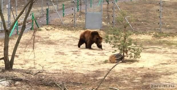 """Бурая медведица Ласка может стать 11 жительницей """"Домажира"""""""