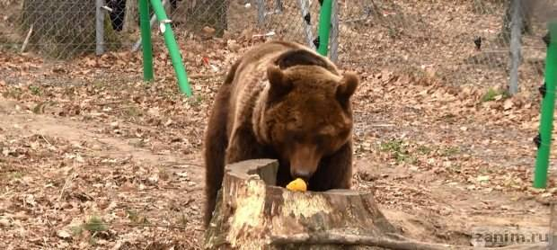 "Ласка в медвежьем приюте ""Домажир"""
