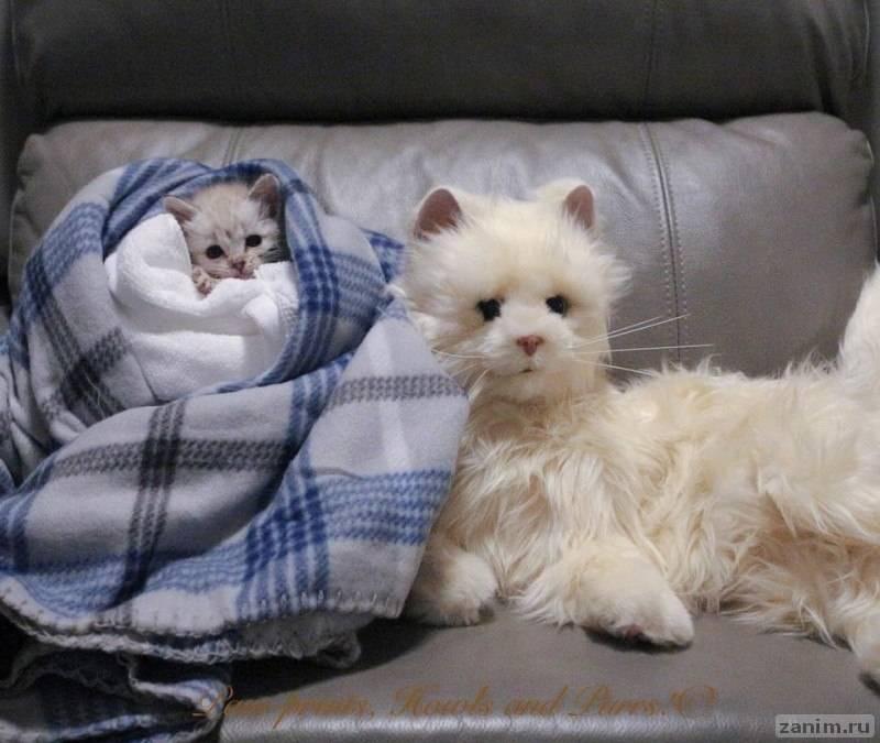 Собака помогла выходить котенка с парализованными лапками