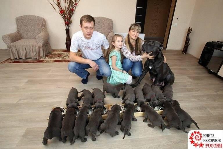 Четвероногая мать-героиня родила 19 щенков и попала в Книгу рекордов России