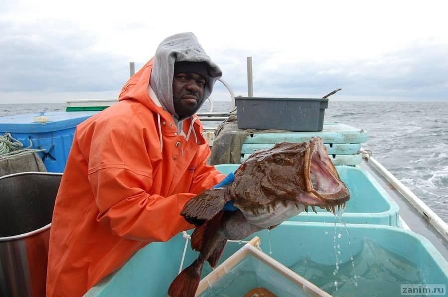Десять малоизвестных рыб-убийц