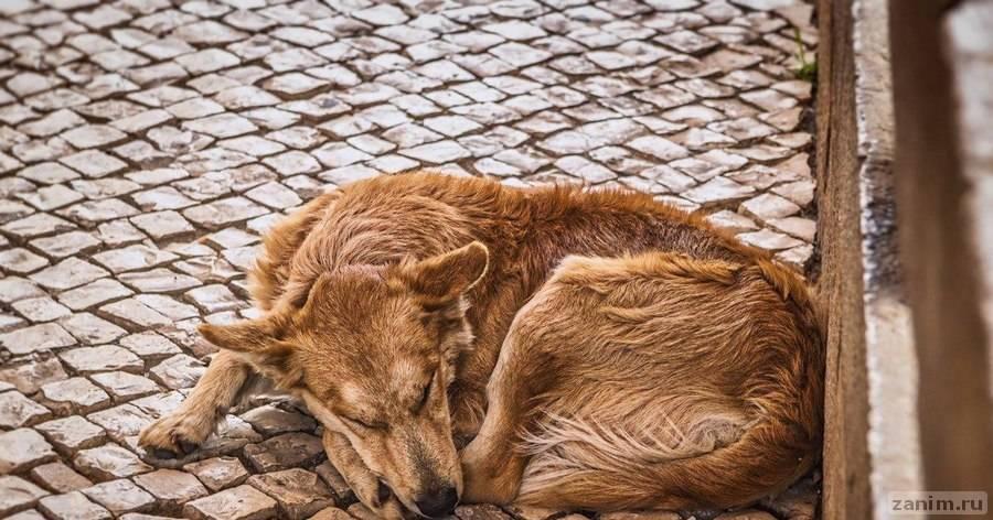 Верный пес из Зеленограда пытался догнать машину хозяина, который его выбросил
