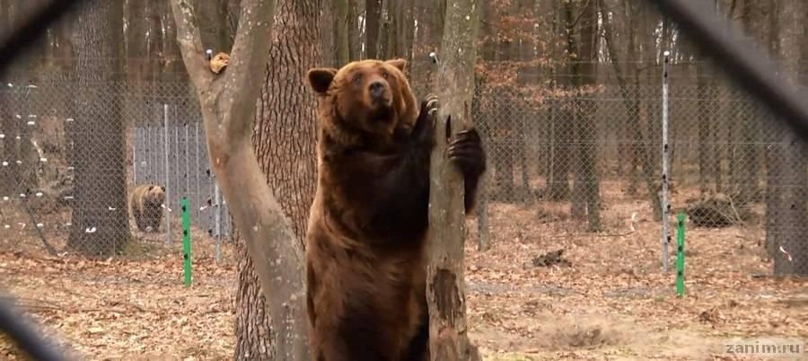 Медведица, которую жестко травили собаками, получила новый дом