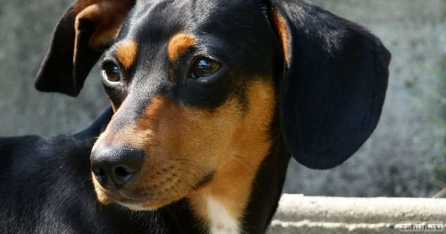 Кинолог назвал самую кусачую породу собак