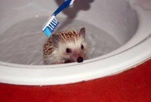 Как правильно мыть ежа