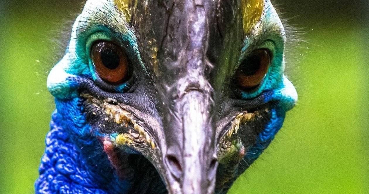 Экзотическая птица убила своего владельца