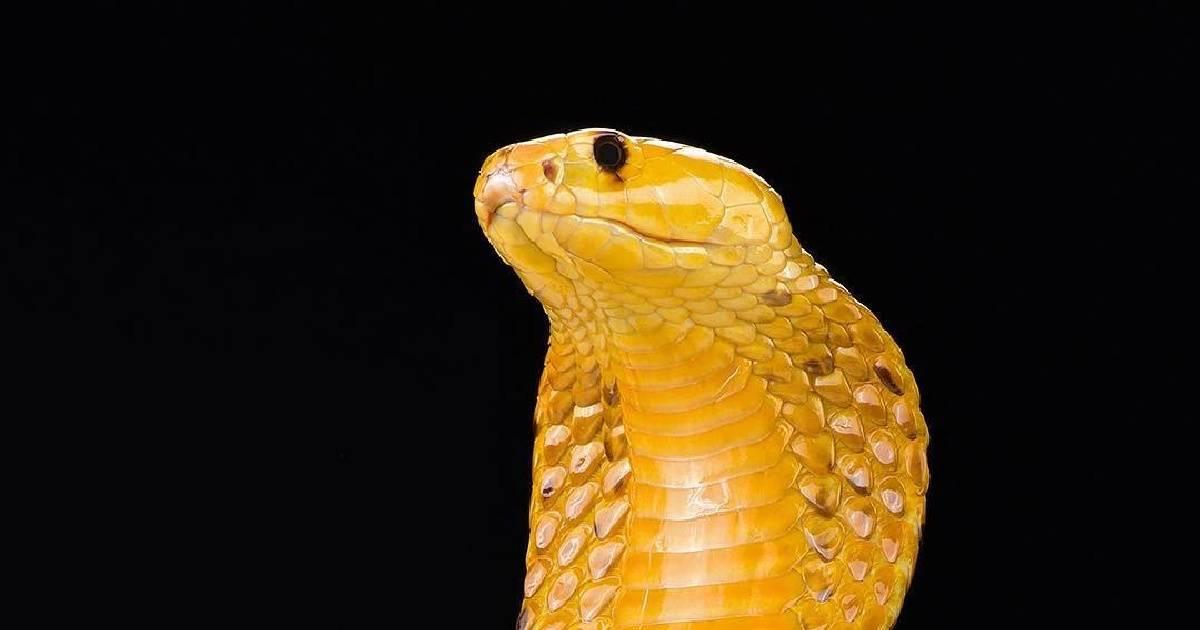 12 фото редких животных-убийц, поражающих своей смертоносной красотой