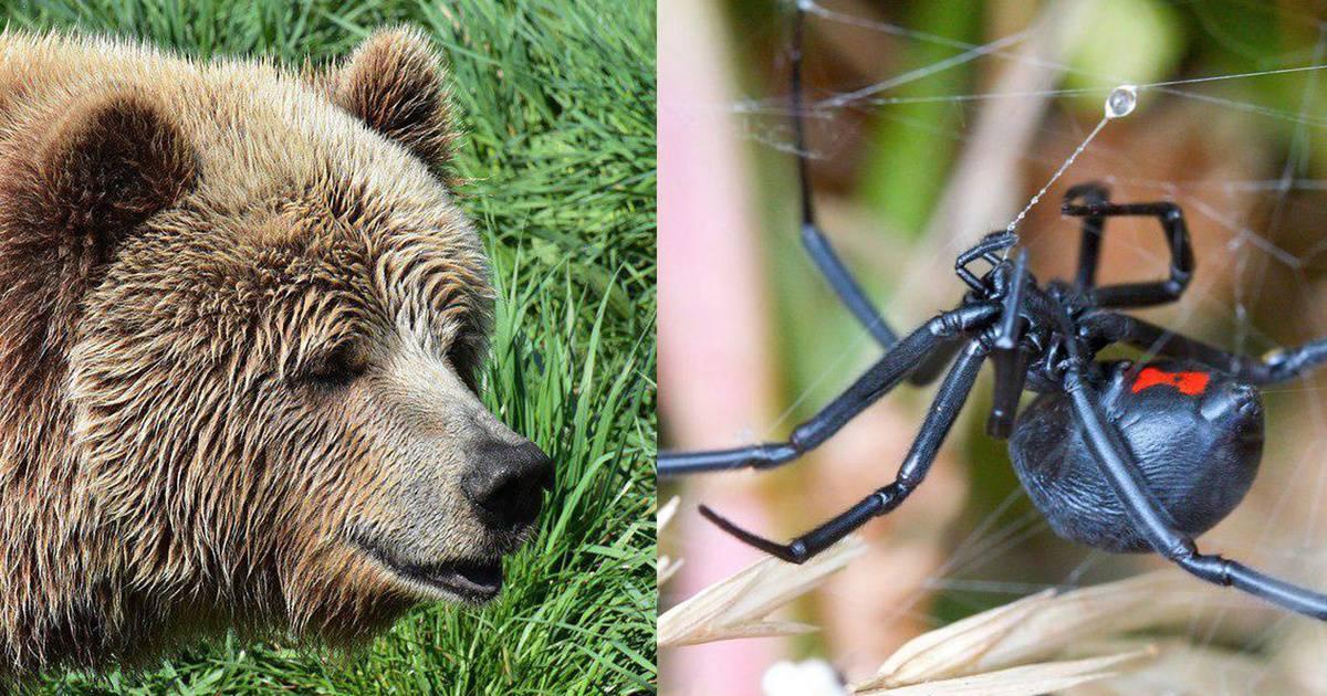 Египтянин составил рейтинг самых опасных животных России