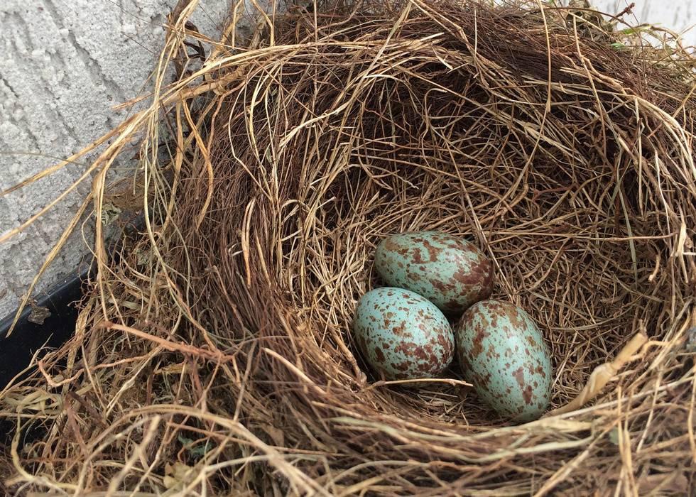 Праздник в гнезде. Как природа встречает Пасху