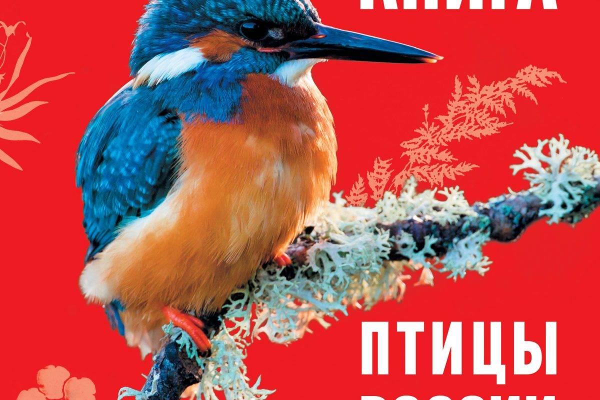 Красная книга России птицы