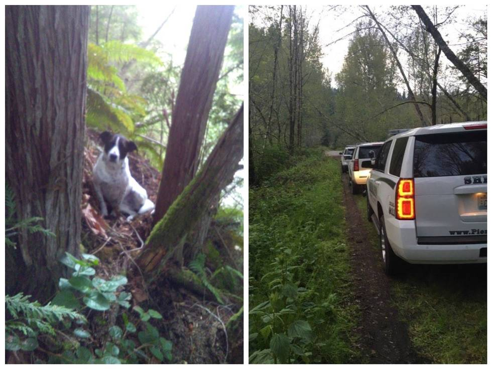 Пёс остался в лесу охранять умершего хозяина