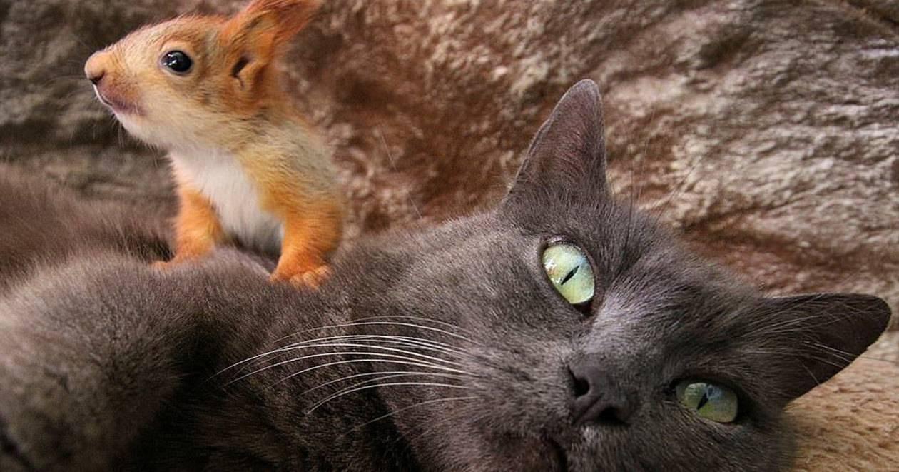 В Крыму кошка воспитывает бельчат