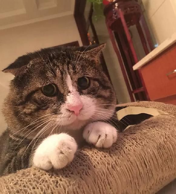 Чересчур эмоциональный кот
