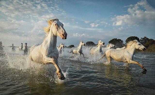 <p>Фото: © Solent News / Scott Stulberg</p>