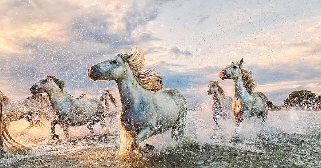 Фотографии, которые заряжают на целый день: табун лошадей, несущийся через реку