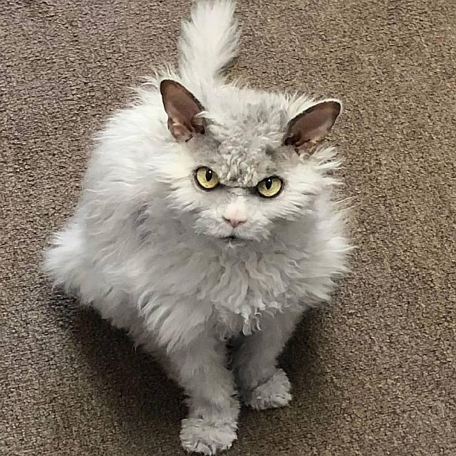 6 угрюмых котиков, пришедших на замену Grumpy Cat