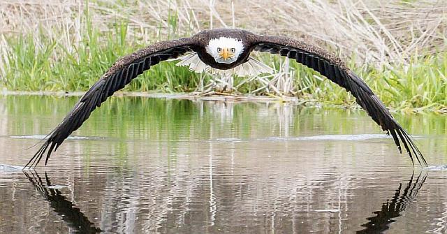 Потрясающая фотография орла