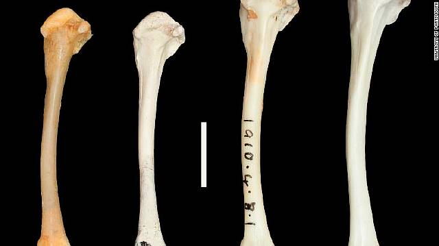Ископаемые птицы возродились спустя тысячи лет