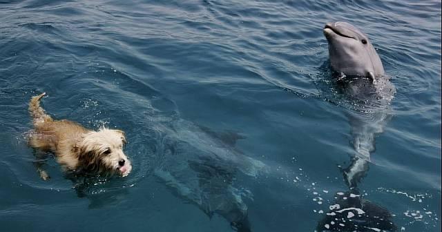 Как собаки общаются с дельфинами