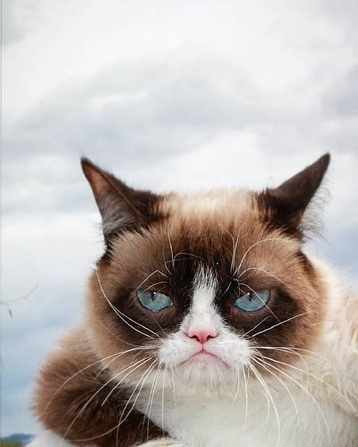 Самая угрюмая кошка в мире, ставшая мемом, скончалась в возрасте 7 лет