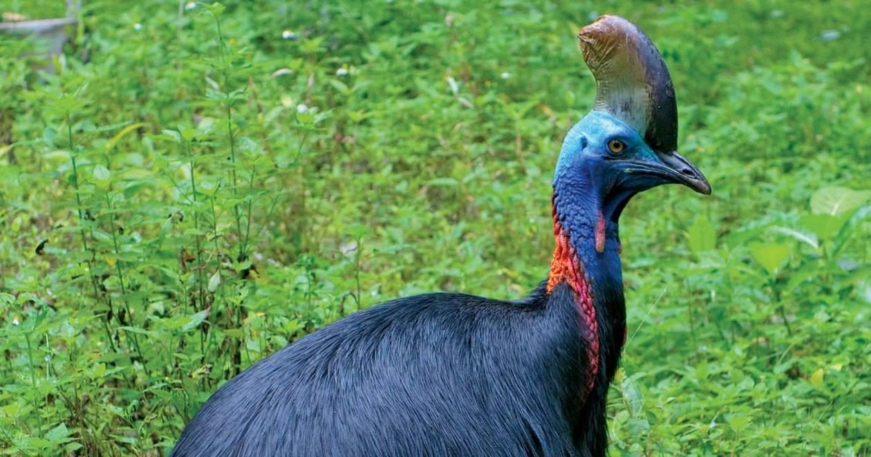 10 опасных животных, которых мы считаем милыми и добрыми