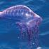 10 самых опасных морских животных
