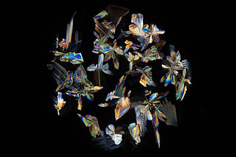 Кристаллы (преимущественно сахар) в высохшей капле кока-колы под микроскопом