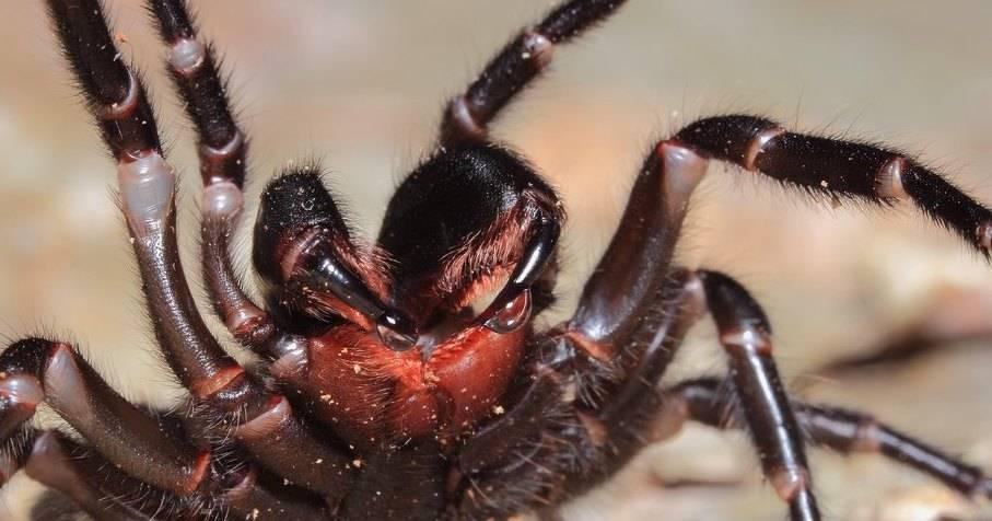 10 ядов животного мира с крайне специфическим действием