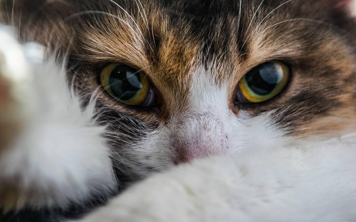 """Куклачёв — о """"щенячьем взгляде"""": Коты ещё большие манипуляторы"""