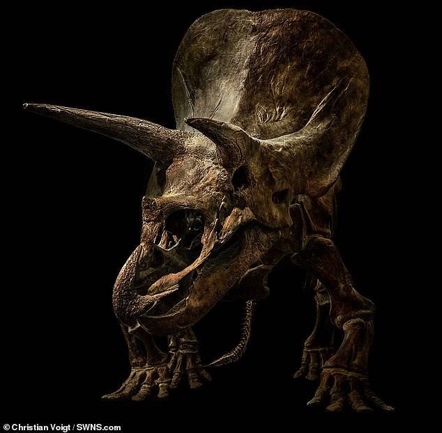 Потрясающая подборка фотографий скелетов динозавров