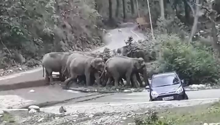 Стадо слонов расправилось с машинами туристов, чтобы перейти дорогу. Видео